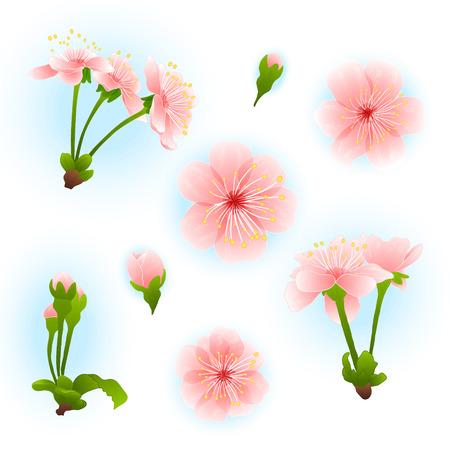 japanese garden: Floral spring background with pink sakura blossom vector Illustration