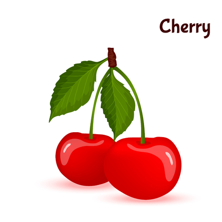 ripe: Red ripe cherry berries with leaves vector