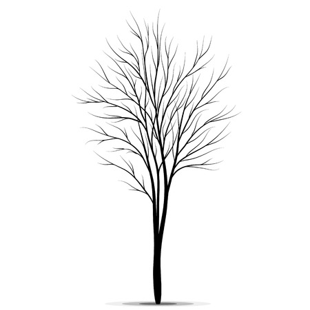 tree isolated: Tree silhouette isolated on white background vector