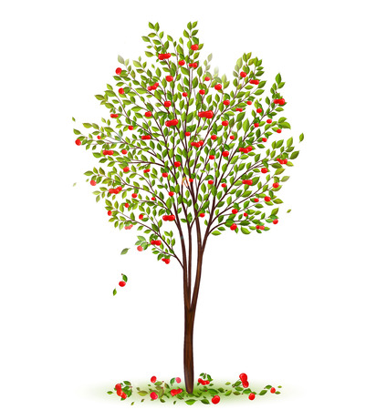 drupe: Cherry tree with berries vector