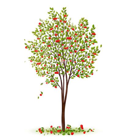 Kersenboom met bessen vector