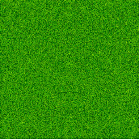 Green grass texture background