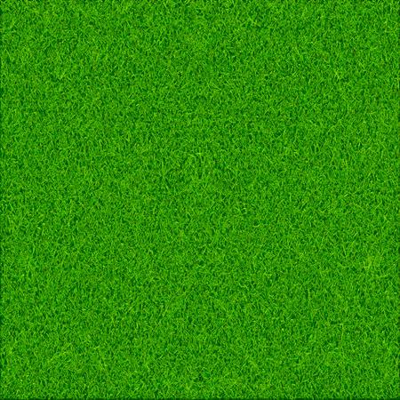 grass texture: Green grass texture background