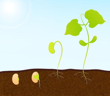 seedling: green plant seedling