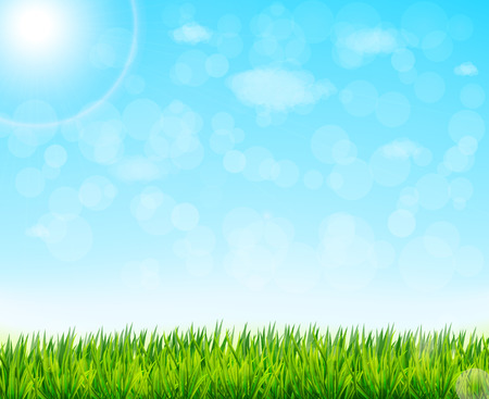 sky and grass: vector nature background with green grass and blue sky