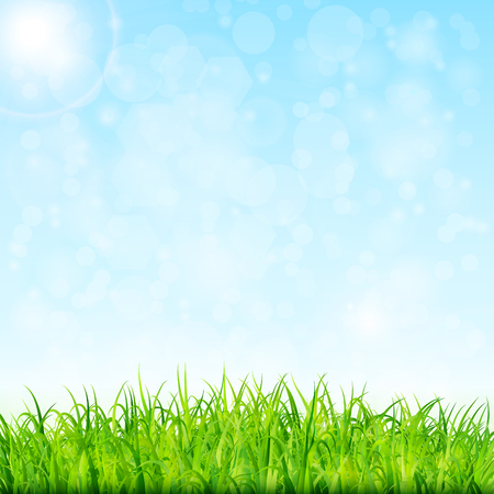 sky and grass: Nature background with green grass and blue sky vector Illustration