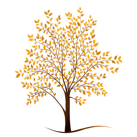 autumn tree: Autumn tree with leaves on white background vector