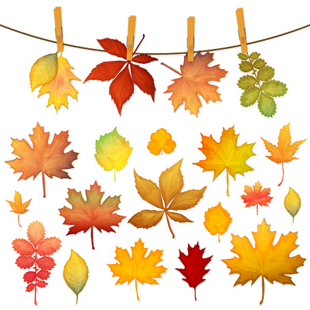 Colorful autumn leaves set vector