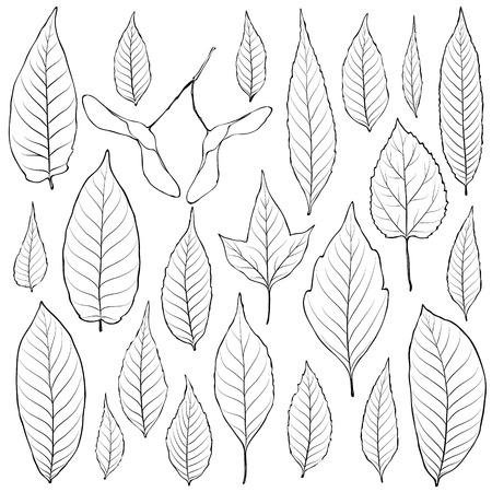 leaf line: Leaves outline set vector. Coloring book page for adult