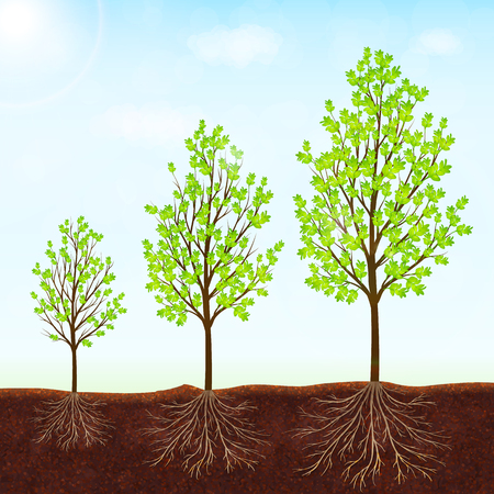 plant life: Growth of the tree vector background Illustration