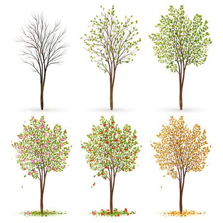 Seasons of tree Stock Illustratie