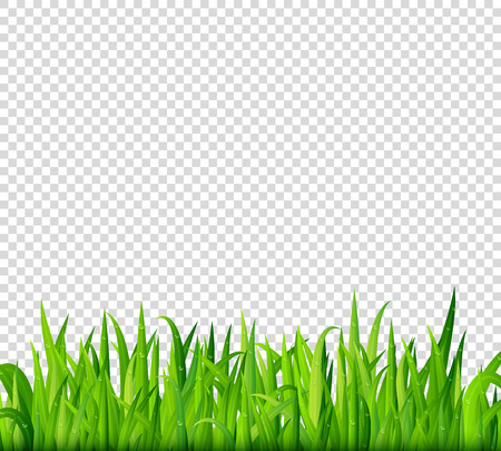 Green grass border on transparent background vector