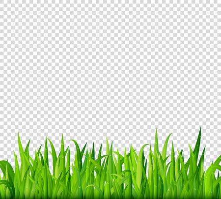 Green grass border on transparent background vector