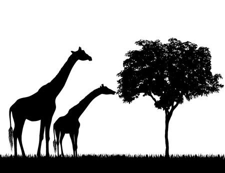 Silhouetten van giraffen en boom op witte vector als achtergrond