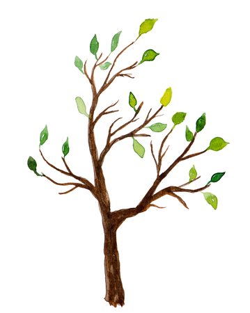 tree: Watercolor tree with green leaves isolated on white background Stock Photo