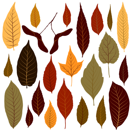 Colorful autumn leaves set on white background vector