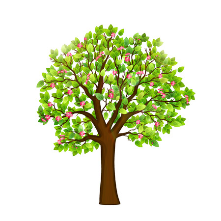 Spring blooming tree on white background vector