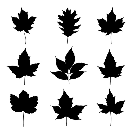 Leaves silhouette set isolated on white background vector