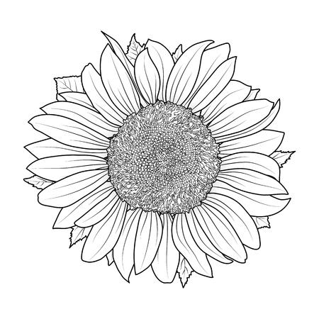 Girasol para colorear vector de libro Ilustración de vector