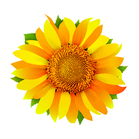 Sunflower isolated on white background vector