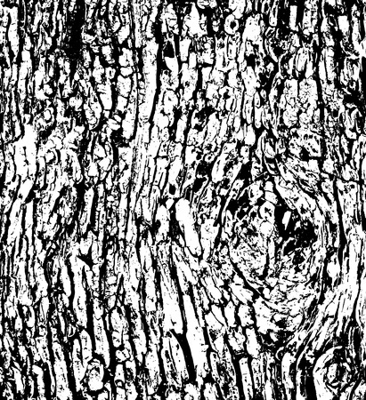 Tree bark texture background vector