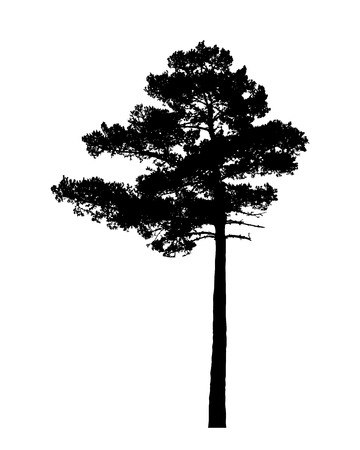 Silueta de árbol de pino aislado en vector de fondo blanco