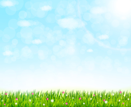 Nature background with green grass and flowers. Vector illustration Stockfoto - 119919549