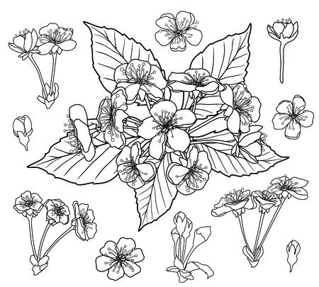 Set di fiori di ciliegio in bianco e nero per il vettore di pagina del libro da colorare