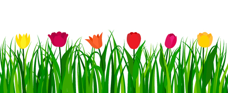 Colorful tulips with green grass isolated on white background. Vector illustration