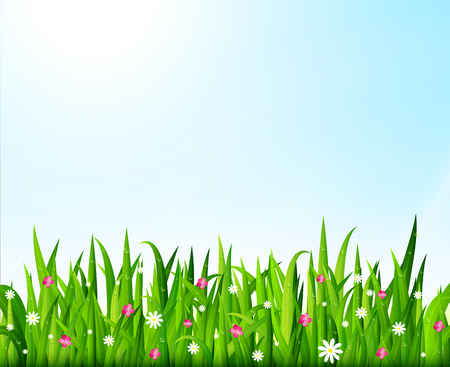 Nature background with green grass and flowers. Vector illustration