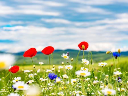 Campo de flores silvestres contra el cielo azul Foto de archivo