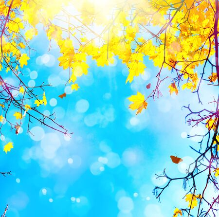 Autumn maple branches with leaves against blue sky in sunny day