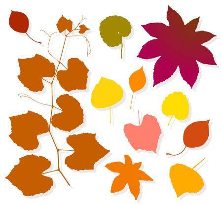 Colorful autumn leaves set on white background. Vector illustration Illusztráció