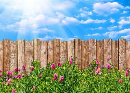 Wooden garden fence at backyard with green grass and flowers in spring Imagens