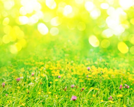 Spring nature background with green grass, wildflowers and bokeh Stock Photo