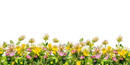 Wild flowers border isolated on white background