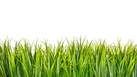 Green grass border isolated on white background Banco de Imagens