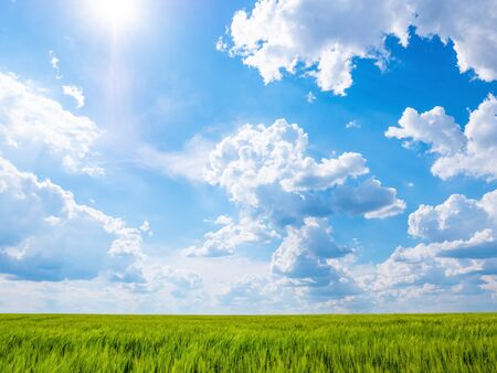 Green field and blue sky with white clouds at sunny day