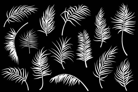 Palm leaves collection isolated. Vector illustration Ilustração