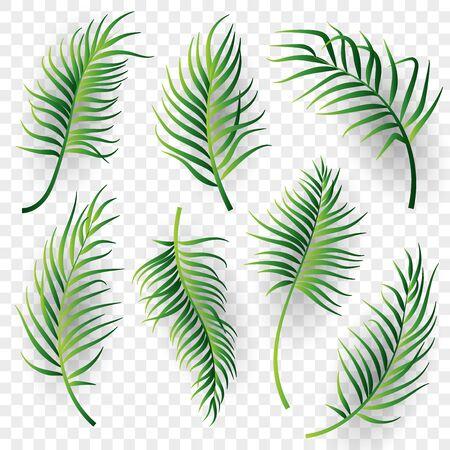 Palm leaves set on transparent background. Vector illustration