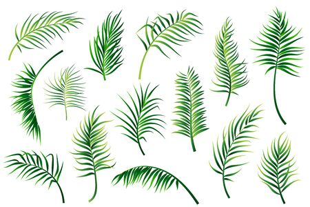 Palm leaves set isolated on white background. Vector illustration