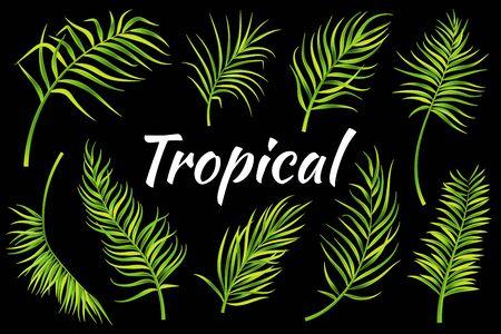 Tropical leaves set. Vector illustration Stock Illustratie