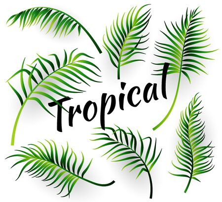 Tropcal leaves collectoin. Vector illustration Stock Illustratie