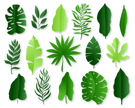 Green tropical leaves on white background. Paper cut style. Vector illustration