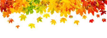 Colorful maple leaves border isolated on white background Banco de Imagens