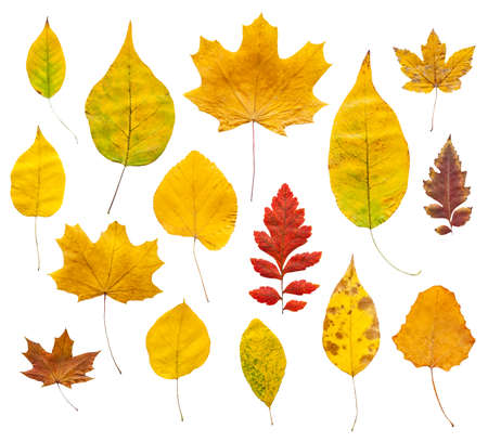 Colorful autumn leaves set isolated on white background