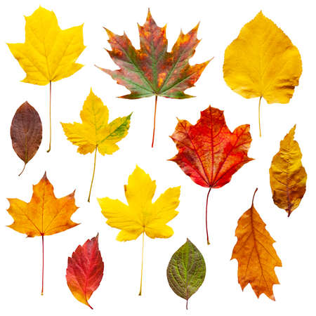 Colorful autumn leaves set isolated on white background Banque d'images