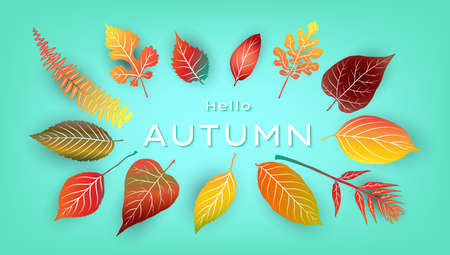 Hello autumn background with bright autumn leaves. Vector illustration
