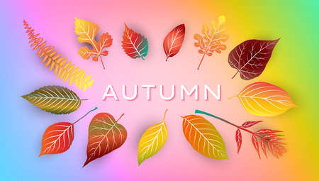 Autumn background with bright autumn leaves. Vector illustration