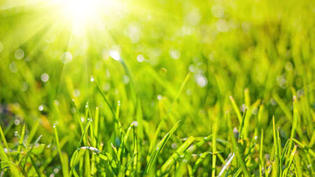 Spring nature background with green grass, sun and bokeh